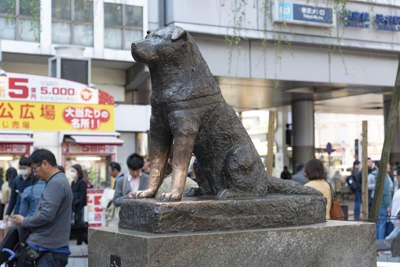statue hachiko le chien fidèle